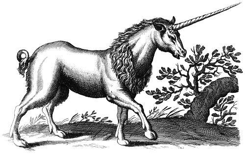0153-c-unicorn-engraving-q75-500x328